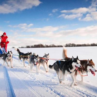 une-animation-hivernale-chiens-de-traineau