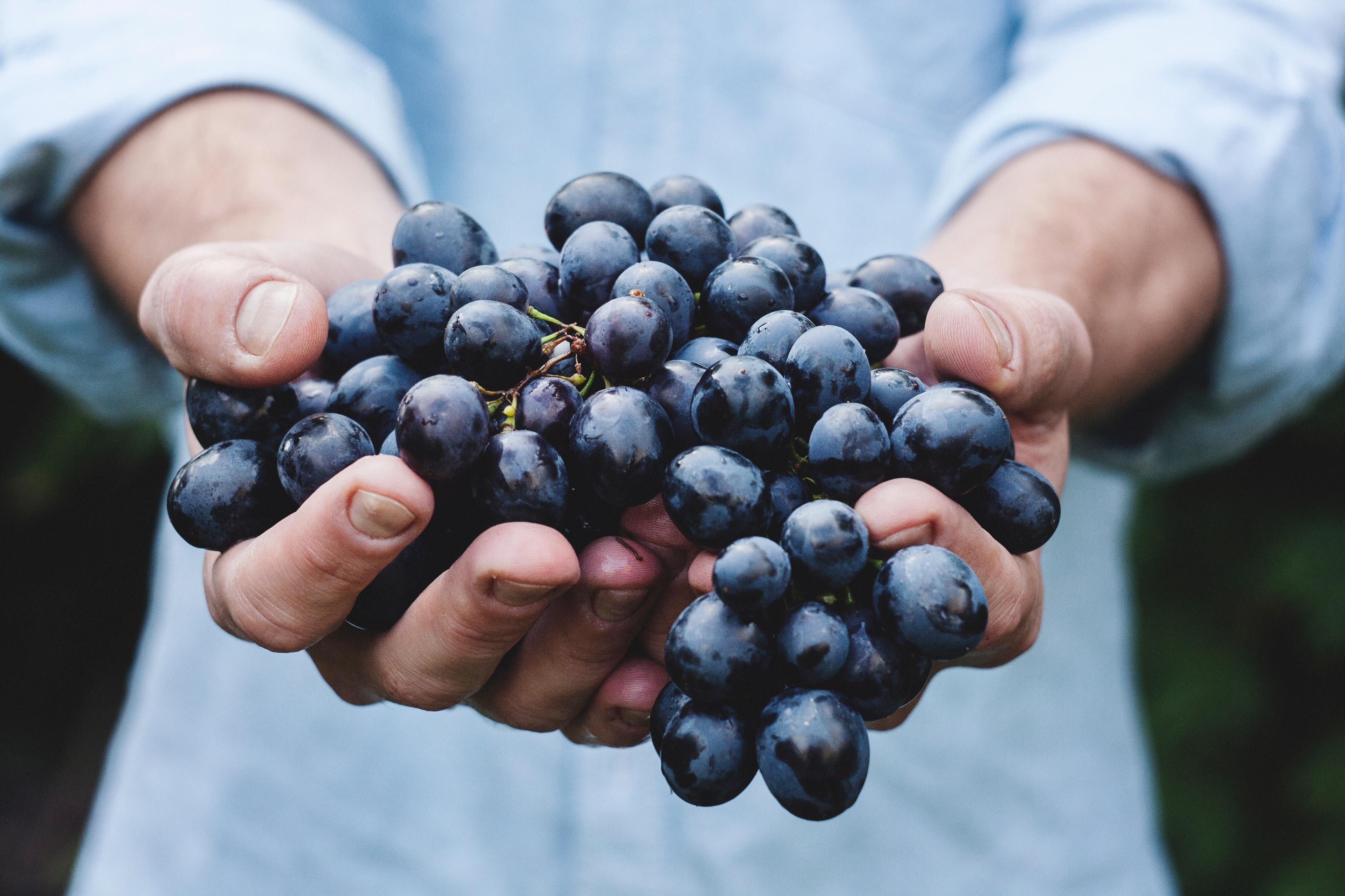 organiser seminaire incentive vin chambery savoie 73