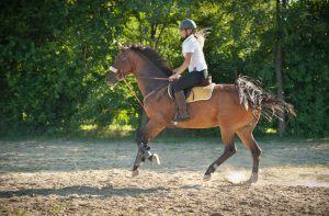 animez seminaire equestre incentive le mans 72