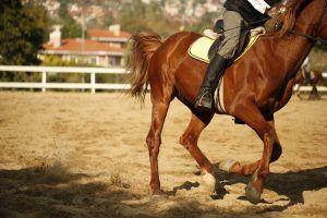 animation seminaire incentive chevaux la sarthe 72