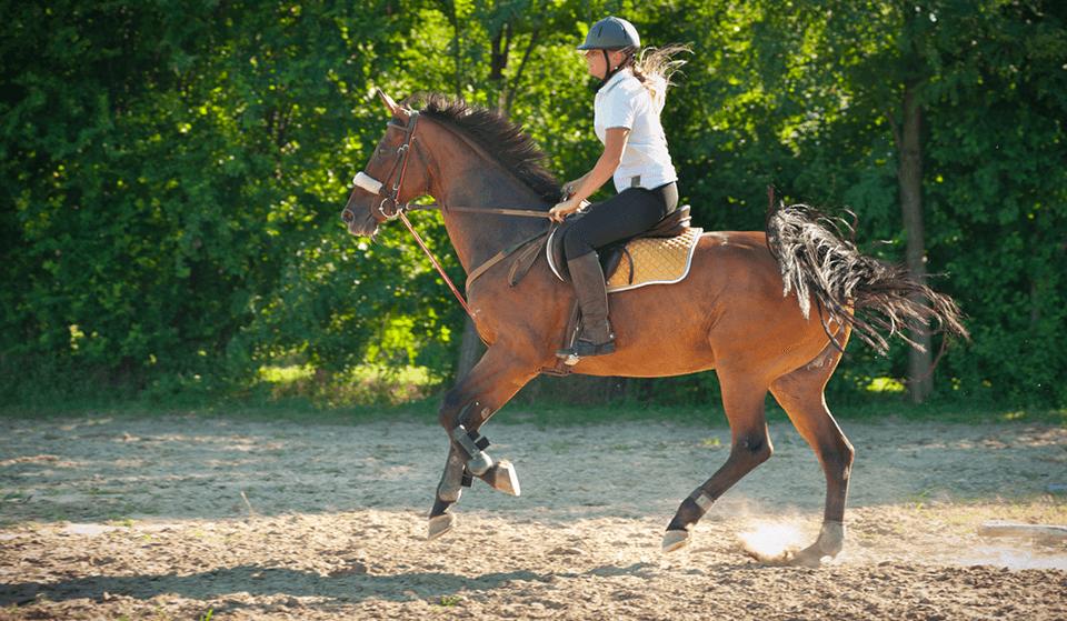 organisation seminaire equestre hippique le mans 72