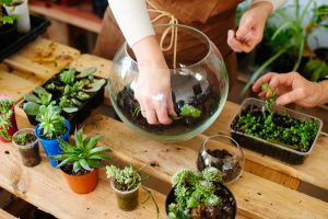 animation bar à plantes