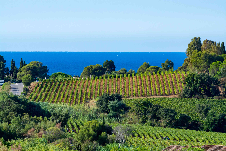 privatisation-domaine-viticole-evenement-entreprise